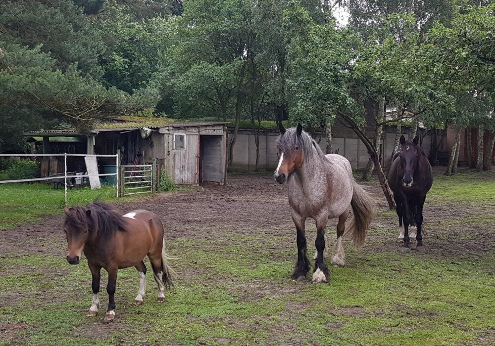 Pferde des Naturhof Usedom