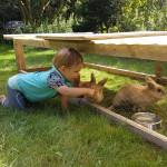 Gastkind bei den Kaninchen vom Naturhof Usedom