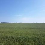 Ausblick aufs Feld Naturhof Usedom