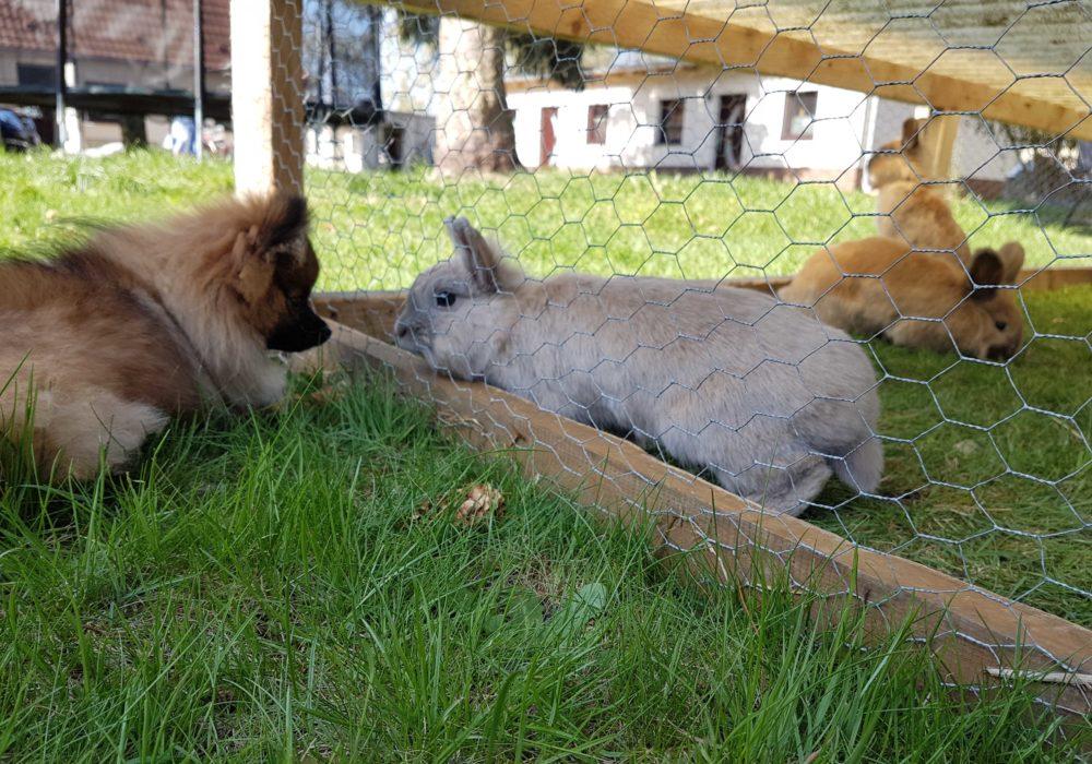 Simba und Mini Naturhof Usedom