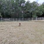 Minipferd Simba vom Naturhof Usedom